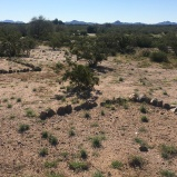 Rocks outline barrack locations at Japanese Internment camp, Gila River, AZ